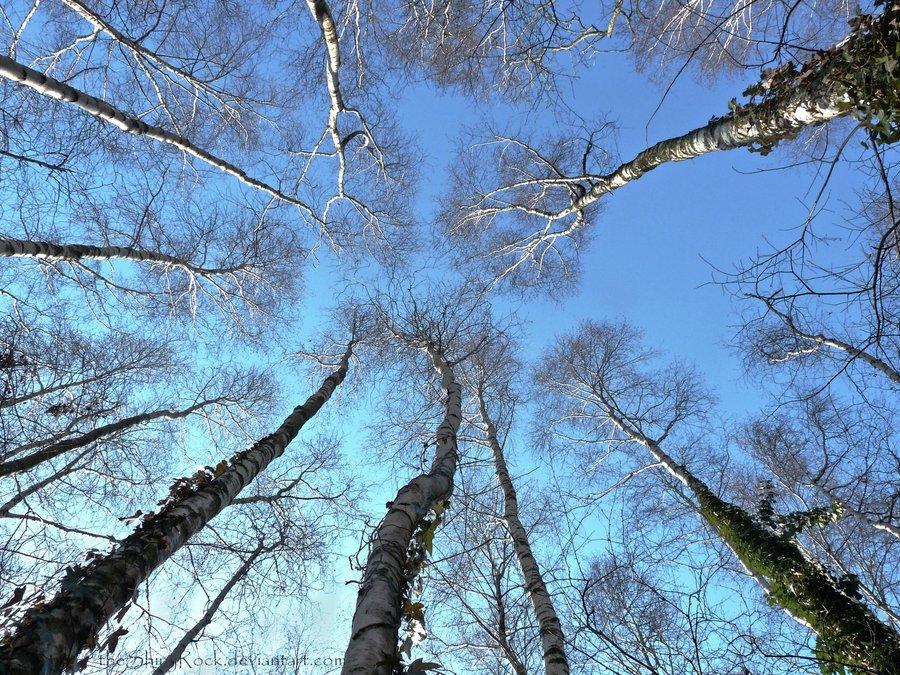 Abbiamo 200 alberi a testa: difendiamoli!