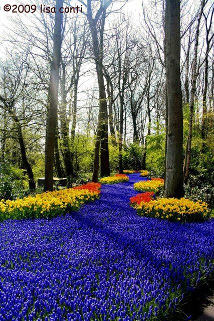 Keukenhof, il parco che si sveglia solo a Primavera