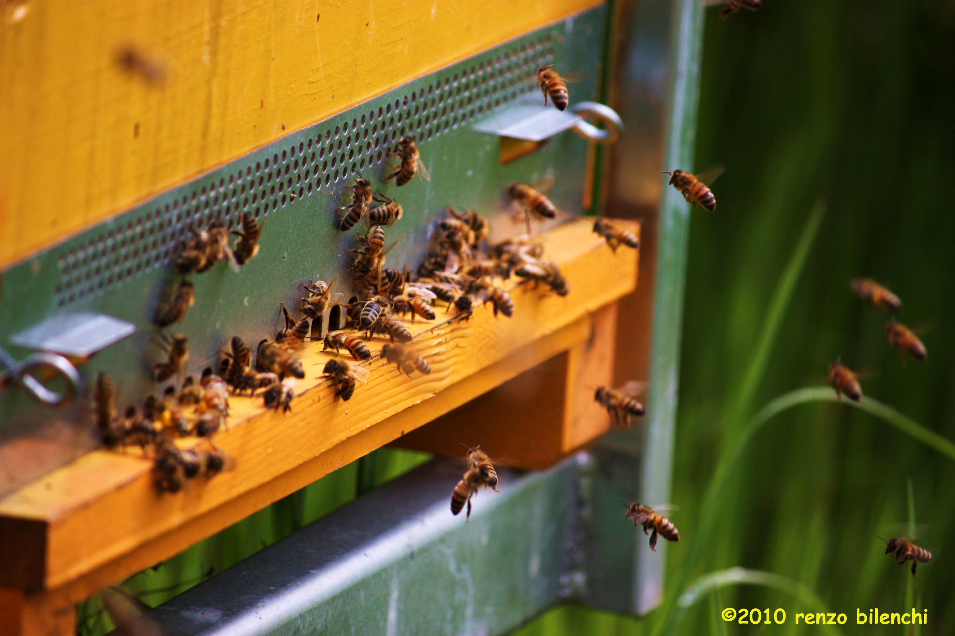 Sciame d'api spaventa turisti in fila alla Torre
